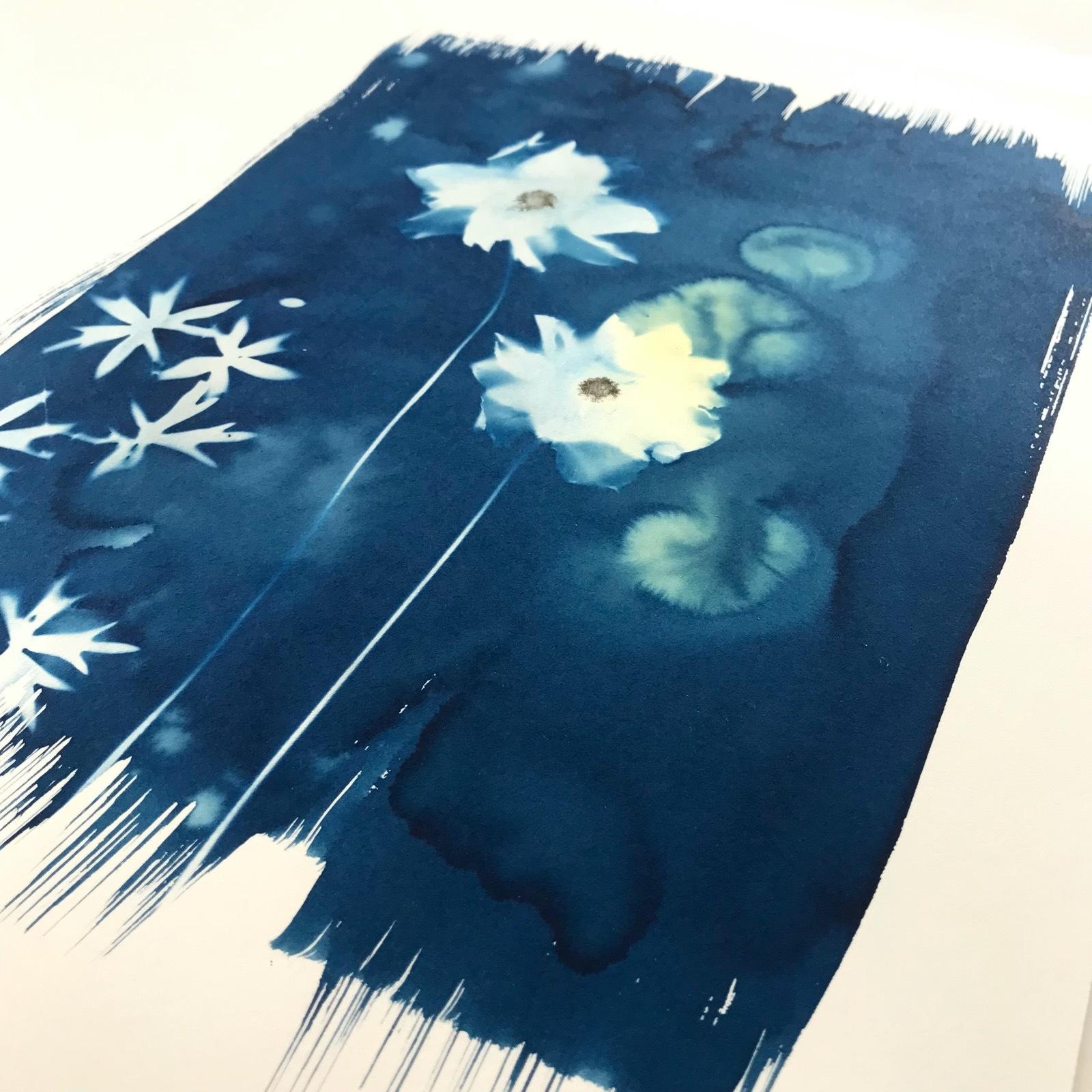 Cyanotype with anemones 18